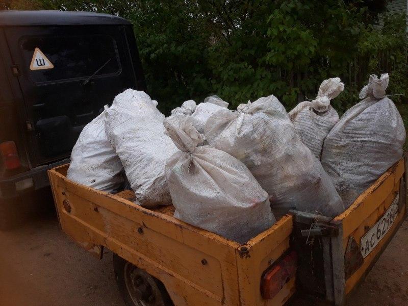 Более 100 тыс сеянцев ели посадили в Псковской области в рамках акции «Живи, лес!», фото-3
